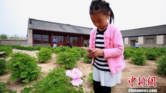 小朋友在兴洲行宫芍药园内专注的拍摄芍药花 关春雷 摄
