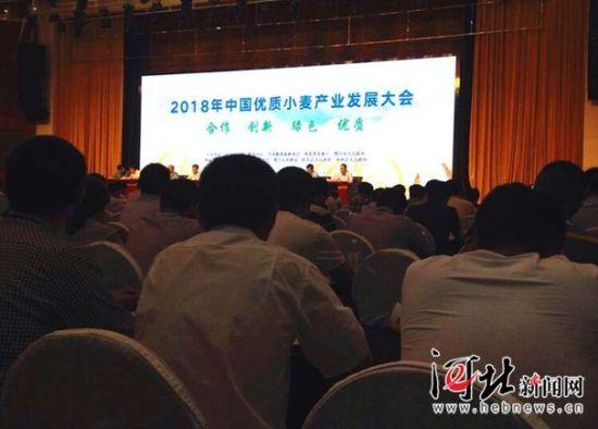 5月16日,2018年全国优质小麦产业发展大会在邢台召开。 记者赵红梅摄