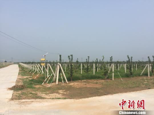 图为威县从容村的精品梨基地。 郝烨 摄