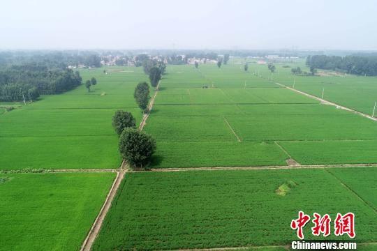 万亩稻田一望无际。 于俊亮 摄