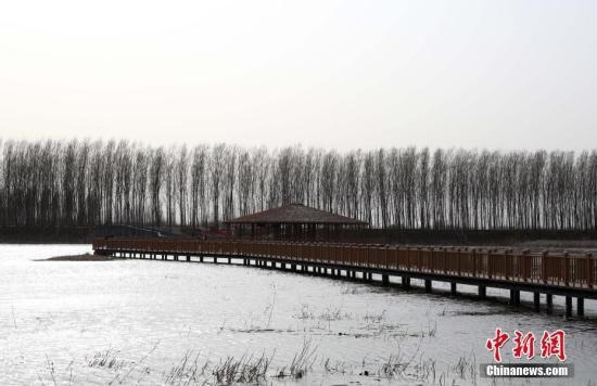 白洋淀春日景色。韩冰 摄