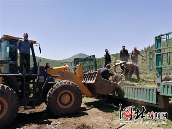 图为准备用装载机往山上装运树苗。记者高振发摄