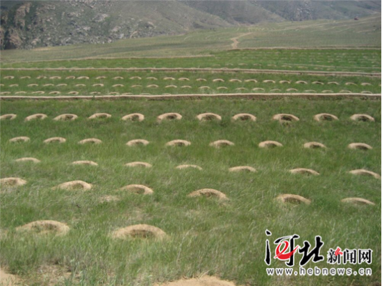 图为崇礼太子城挖掘的植苗坑。记者李艳红摄