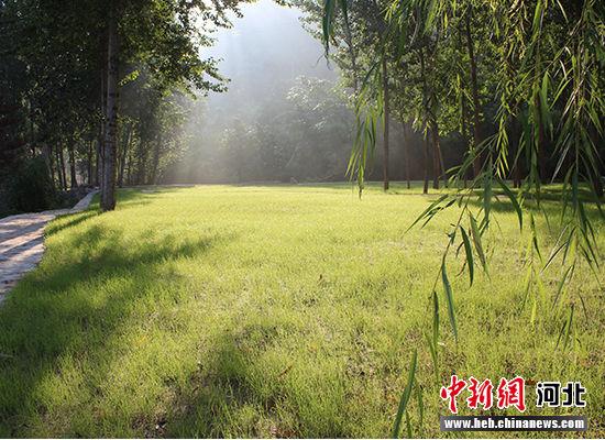 景区内古树芳草相映成趣。于俊亮摄