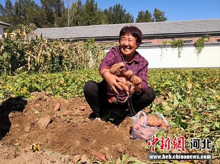 农民丰收的喜悦。 张桂芹 摄