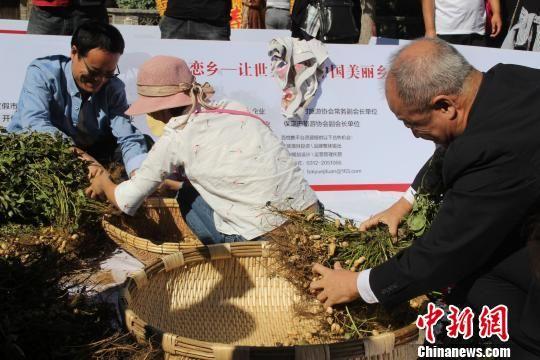 """月23日,易县""""恋乡?太行水镇""""景区举办落花生游客参与活动。 于俊亮 摄"""