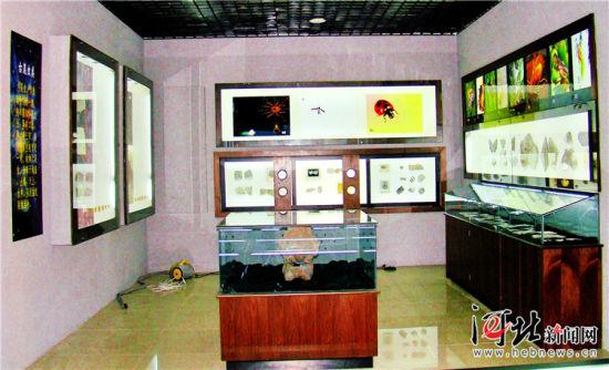 丰宁古生物化石博物馆内的古昆虫类展区。王金玲摄