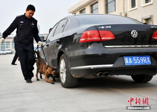 警犬完成搜爆科目。中新社记者 翟羽佳 摄