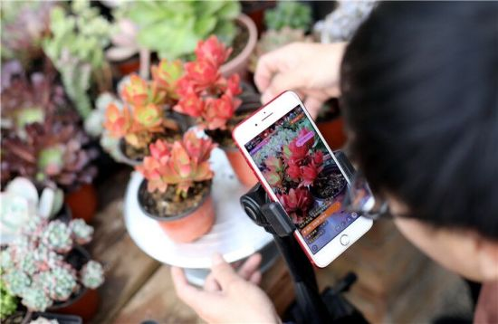 1月10日,刘振健在大棚里通过手机直播,线上推介销售自己的多肉盆景。