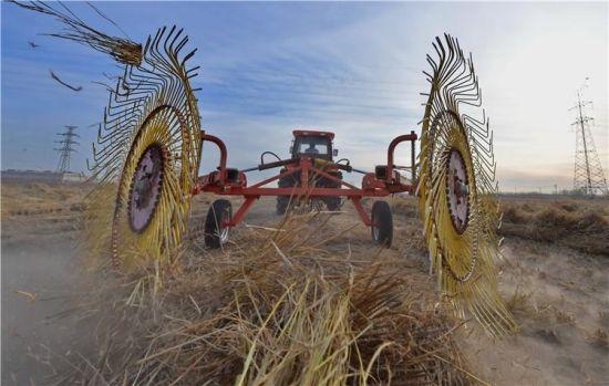 1月10日,在唐山海港经济开发区王滩镇药王阁村的农田,工人驾驶机械设备回收秸秆。