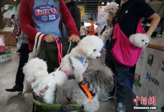 资料图:2019年1月18日,香港宠物节暨国际宠物用品博览在香港会展中心开幕中新社记者 张炜 摄