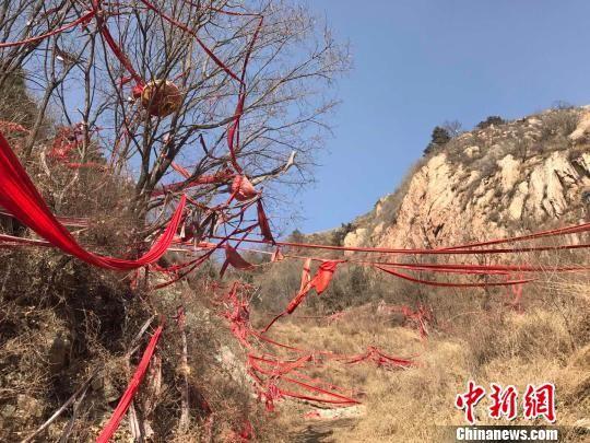 图为磨子沟村的后山遍野的红绸子。 张帆 摄