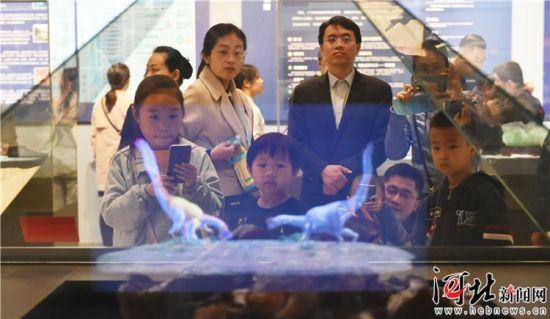 """4月21日,在河北博物院,观众被""""第50个世界地球日科普展""""中的全息动画""""窃蛋龙孵蛋""""所吸引。"""