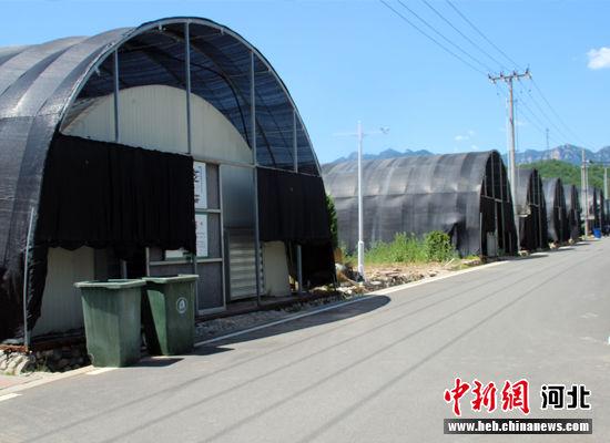 阜平县现代食用菌产业核心园区的部分食用菌大棚。 徐巧明 摄