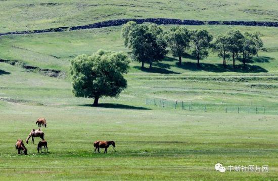 6月28日,草原天路美景如画。中新社记者 张畅 摄