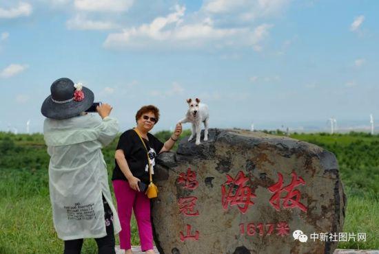 6月28日,游客在草原天路与爱犬合影。中新社记者 张娅子 摄