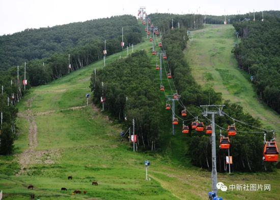 6月28日,崇礼太舞冰雪小镇内的观光缆车运行繁忙。中新社记者 杨艳敏 摄
