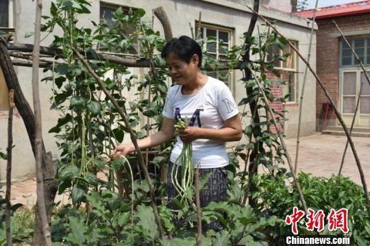 赵雪果在自家的小院里种植蔬菜。 张赫赫 摄