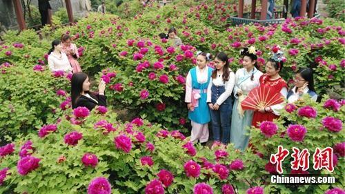 荣国府景区,游人在景区内赏花。荣国府管理处供图