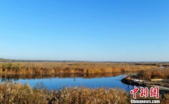 图为白洋淀秋日美景。 韩冰 摄