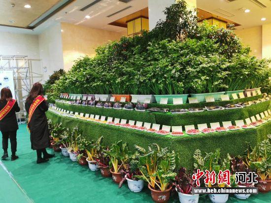 饶阳设施蔬菜展示。 王鹏 摄