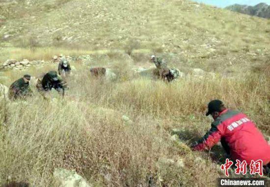 曲阳县东口南村的建档立卡贫困户上山割草打防火带。 曲阳县委宣传部供图
