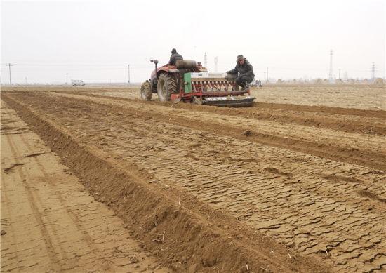 3月1日,陶向琳(右)在田間與社員一起采收春小麥。