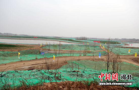 图为唐河入淀口湿地生态保护项目现场。