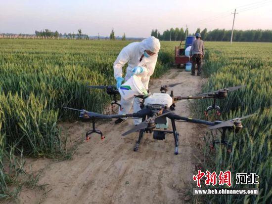 """河北清河:""""农业技术网格化""""服"""