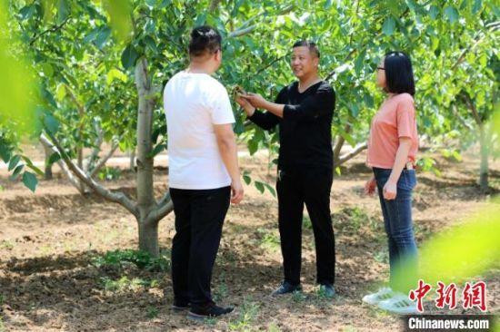 农业技术人员到李元寨村核桃产业园进行技术指导。 姚友谅 摄