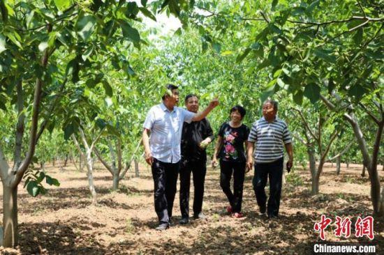 平乡县李元寨村干部和果农谋划核桃产业发展。 姚友谅 摄