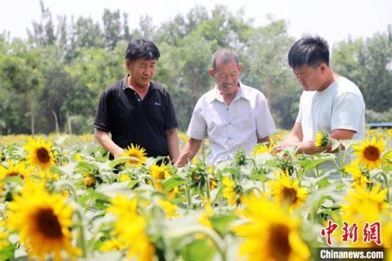 封洪康村党支部书记李建科(右一)在了解油葵种植情况。 姚友谅 摄