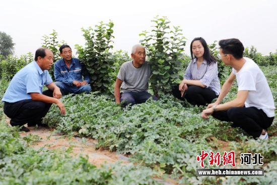 平乡县农技人员到榛子种植基地调研指导。 姚有谅 摄