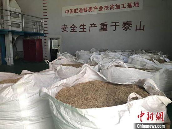 图为沽源县北麦生态农业有限公司的藜麦加工车间。中新社记者 郝烨 摄