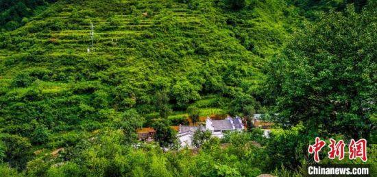 千亩松林掩映下的涞水县南湖村。 夏长江 摄