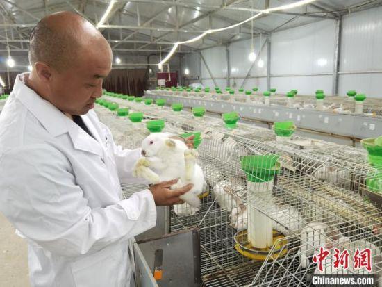 图为赵玉星正在观察獭兔长势。 李洋 摄