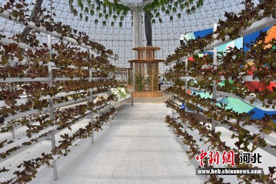 故城县东大洼省级现代农业园区。 齐红雨 摄