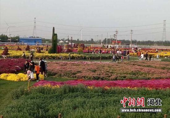 故城菊花产业文化博览园。 齐红雨 摄