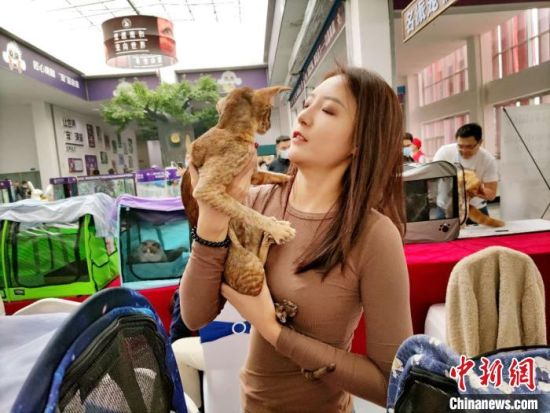 """河北南和:第四届宠物产业博览会开幕 小宠物获万千""""宠""""爱——中国新闻网河北"""