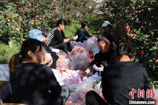 村民在为刚采摘下来的苹果打包。 宿雅男 摄