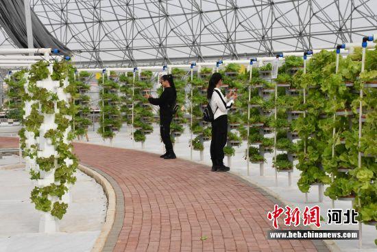故城大力发展农业产业,夯实脱贫攻坚的根基。 供图