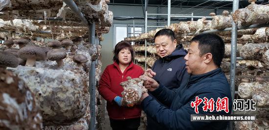 保定银行工作人员到扶贫园区了解香菇生产情况。 徐巧明 摄