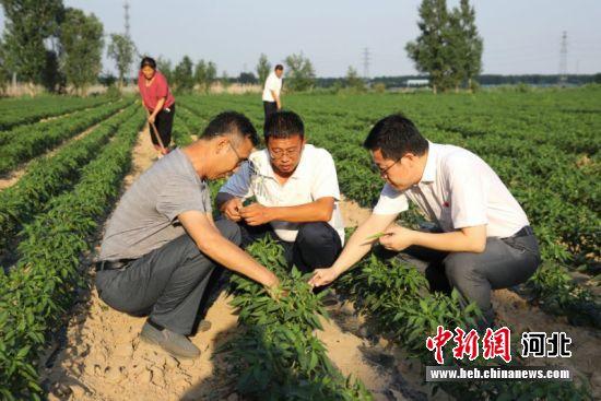 图为扶贫工作人员深入田间地头指导种植。 供图