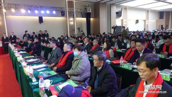 2020河北医药健康产业发展论坛现场。长城网记者 吴新光 摄