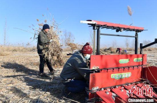 图为雄安新区安新县冬季冰上芦苇收割现场工作人员正在检查设备。 韩冰 摄