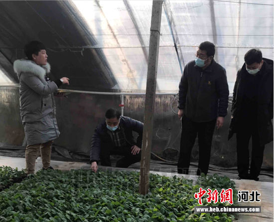 督导指导组查看大营果品蔬菜专业合作社蔬菜生长情况。 博野县扶贫办供图