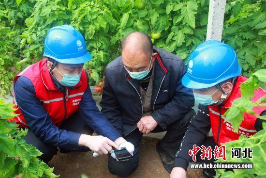 国网巨鹿县供电公司党员服务队在村民司敬活大棚中开展上门服务。 杨飞 摄