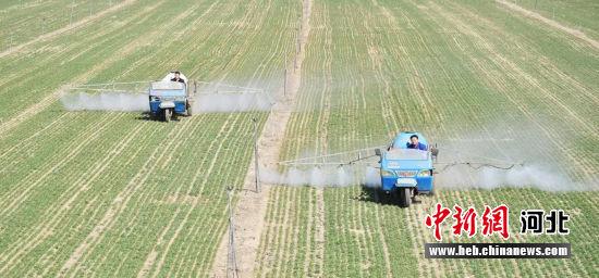 给农作物喷洒农药(资料图)。 定州市委宣传部供图
