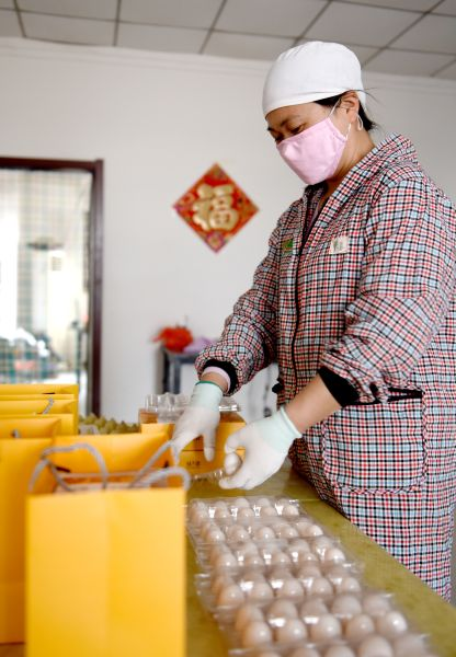 工人在分装新鲜鸽蛋。 供图