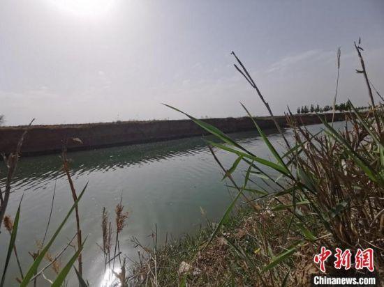 武强县西五引渠一段。 王鹏 摄